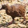 New-Zealand-Day-Eight-Stewart-Island-Ulva-Islan-birds-d-15-of-28