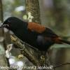 New-Zealand-Day-Eight-Stewart-Island-Ulva-Islan-birds-d-2-of-28