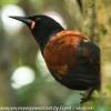 New-Zealand-Day-Eight-Stewart-Island-Ulva-Islan-birds-d-5-of-28