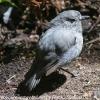 New-Zealand-Day-Eight-Stewart-Island-Ulva-Islan-birds-d-8-of-28