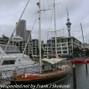 New-zealand-Day-Eighteen-Auckland-afternoon-walk-February-23-7-of-22