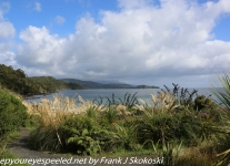 New-Zealand-Day-Eleven-Stewart-Island-afternoon-hike-1-of-2