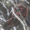 New-Zealand-Day-Eleven-Stewarts-Island-morning-walk-birds-12-of-17
