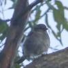 New-Zealand-Day-Eleven-Stewarts-Island-morning-walk-birds-15-of-17