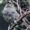 New-Zealand-Day-Eleven-Stewarts-Island-morning-walk-birds-2-of-17