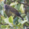 New-Zealand-Day-Eleven-Stewarts-Island-morning-walk-birds-5-of-17