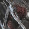 New-Zealand-Day-Eleven-Stewarts-Island-morning-walk-birds-9-of-17