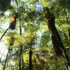 New-zealand-Day-Fifteen-Rotorua-Rewood-forest-and-Blue-lake-10-of-49