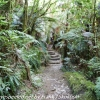 New-zealand-Day-Fifteen-Rotorua-Rewood-forest-and-Blue-lake-12-of-49