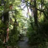 New-zealand-Day-Fifteen-Rotorua-Rewood-forest-and-Blue-lake-18-of-49