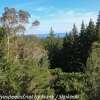 New-zealand-Day-Fifteen-Rotorua-Rewood-forest-and-Blue-lake-20-of-49