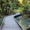 New-zealand-Day-Fifteen-Rotorua-Rewood-forest-and-Blue-lake-5-of-49