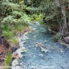 New-zealand-Day-Fifteen-Rotorua-Rewood-forest-and-Blue-lake-6-of-49