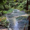 New-zealand-Day-Fifteen-Rotorua-Rewood-forest-and-Blue-lake-8-of-49