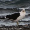 New-Zealand-Day-Five-lake-tepako-birds-1-of-23