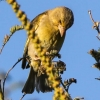 New-Zealand-Day-Five-lake-tepako-birds-11-of-23