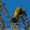 New-Zealand-Day-Five-lake-tepako-birds-12-of-23