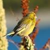 New-Zealand-Day-Five-lake-tepako-birds-14-of-23