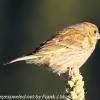 New-Zealand-Day-Five-lake-tepako-birds-15-of-23