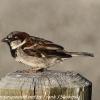 New-Zealand-Day-Five-lake-tepako-birds-16-of-23