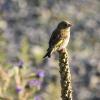 New-Zealand-Day-Five-lake-tepako-birds-17-of-23