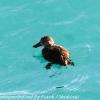 New-Zealand-Day-Five-lake-tepako-birds-18-of-23