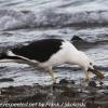 New-Zealand-Day-Five-lake-tepako-birds-2-of-23