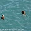 New-Zealand-Day-Five-lake-tepako-birds-20-of-23