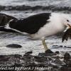 New-Zealand-Day-Five-lake-tepako-birds-4-of-23
