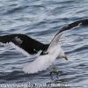 New-Zealand-Day-Five-lake-tepako-birds-8-of-23