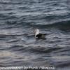 New-Zealand-Day-Five-lake-tepako-birds-9-of-23