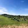 New-Zealand-Day-Four-Lake-Tepako-walk-9-of-30
