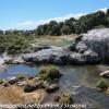 New-Zealand-Day-Fourteen-Rotorua-geysers-and-walk-5-of-11