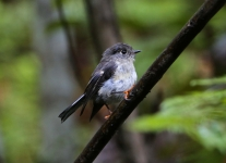 New-Zealand-Day-Nine-Stewart-Island-evening-hike-birds-1-of-8