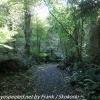 New-Zealand-Day-Nine-Stewart-Island-evening-hike-13-of-22