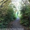 New-Zealand-Day-Nine-Stewart-Island-evening-hike-17-of-22