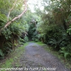 New-Zealand-Day-Nine-Stewart-Island-evening-hike-3-of-22