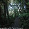 New-Zealand-Day-Nine-Stewart-Island-evening-hike-5-of-22