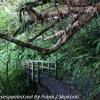 New-Zealand-Day-Nine-Stewart-Island-evening-hike-8-of-22