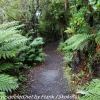 New-Zealand-Day-Nine-Stewart-Island-afternoon-hike-17-of-48