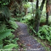 New-Zealand-Day-Nine-Stewart-Island-afternoon-hike-19-of-48