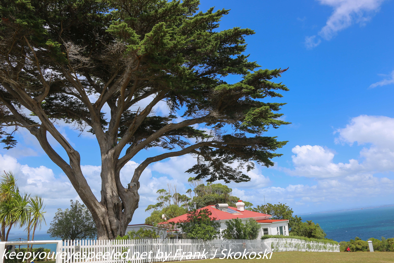 New-zealand-Day-Nineteen-Auckland-Tiritiri-Matangi-15-of-24