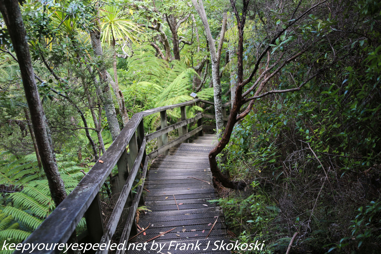 New-zealand-Day-Nineteen-Auckland-Tiritiri-Matangi-19-of-24
