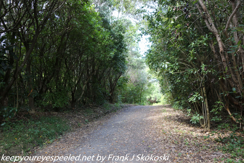 New-zealand-Day-Nineteen-Auckland-Tiritiri-Matangi-5-of-24
