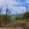 New-zealand-Day-Nineteen-Auckland-Tiritiri-Matangi-12-of-21