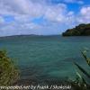 New-zealand-Day-Nineteen-Auckland-Tiritiri-Matangi-13-of-21