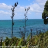 New-zealand-Day-Nineteen-Auckland-Tiritiri-Matangi-16-of-21