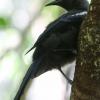 New-zealand-Day-Nineteen-Auckland-Tiritiri-Matangi-birds-1-of-31