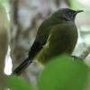 New-zealand-Day-Nineteen-Auckland-Tiritiri-Matangi-birds-3-of-31