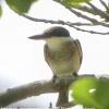 New-zealand-Day-Nineteen-Auckland-Tiritiri-Matangi-birds-8-of-9